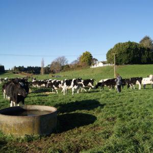 Herd Visit - Rangeview Holsteins (Laurie & Kate Phipps)
