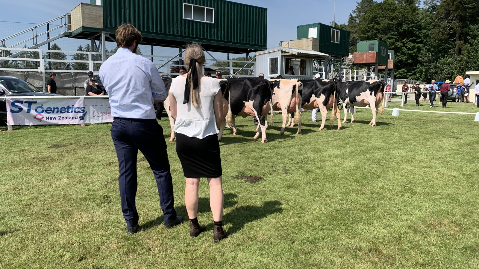 Judges looking at the best udder winners.