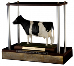 Snowline Trophy